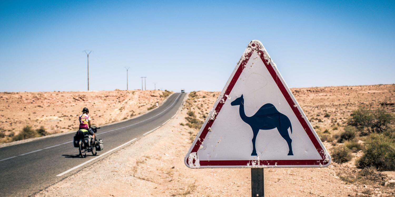 adventure-team-camel